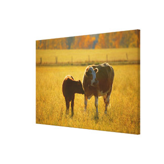 Cows at pasture gallery wrap canvas