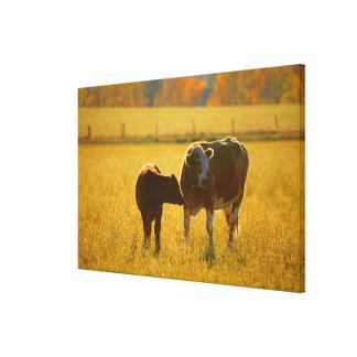 Cows at pasture canvas print