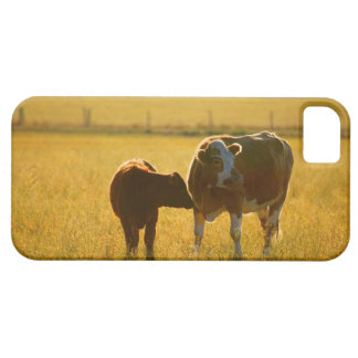 Cows at pasture iPhone 5 covers