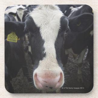 Cows Coasters