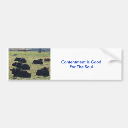 Cows, Contentment Is Good For The Soul Bumper Stickers