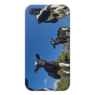 Cows feeding on pasture iPhone 4/4S cover