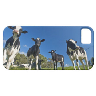 Cows feeding on pasture iPhone 5 covers