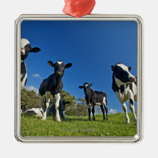Cows feeding on pasture Silver-Colored square decoration