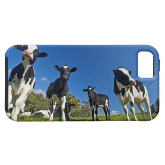 Cows feeding on pasture tough iPhone 5 case