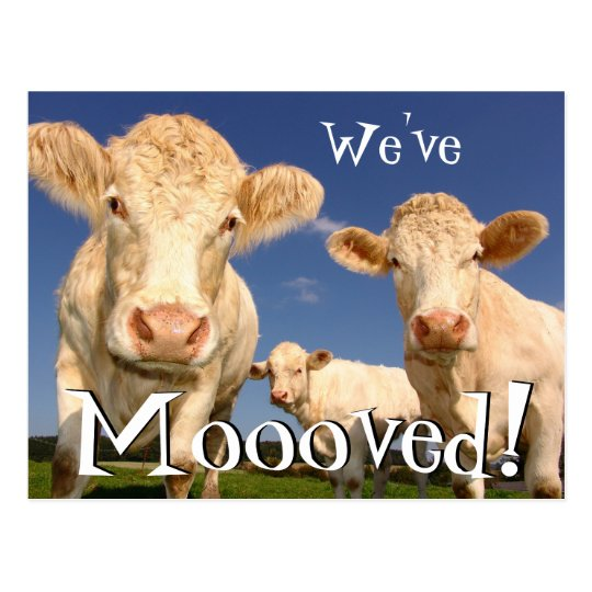 Cows Funny New Address We've Moved Postcard