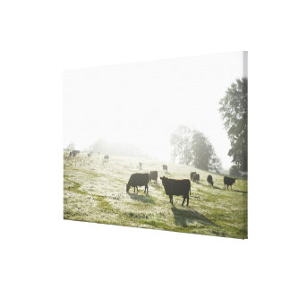 Cows grazing in field in morning light. canvas print