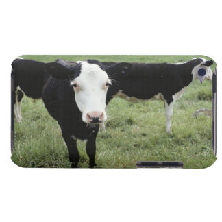 Cows grazing in meadow, Nova Scotia, Canada iPod Touch Cases