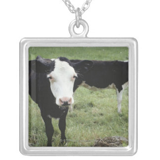 Cows grazing in meadow, Nova Scotia, Canada Silver Plated Necklace
