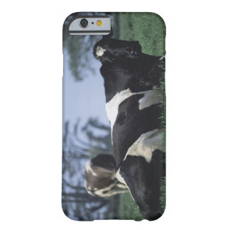 cows in a pasture barely there iPhone 6 case