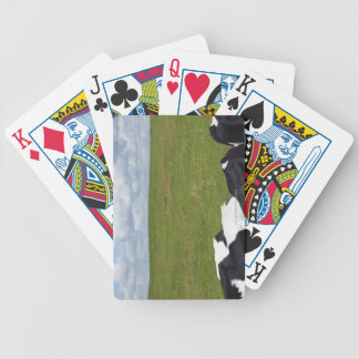 Cows in a pasture bicycle playing cards