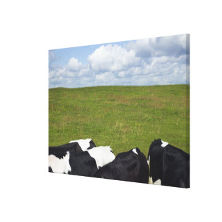 Cows in a pasture. canvas print