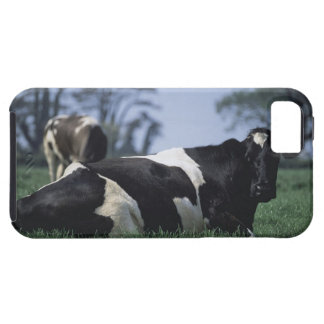 cows in a pasture case for the iPhone 5