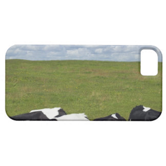 Cows in a pasture. iPhone 5 cover