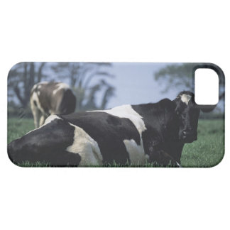 cows in a pasture iPhone 5 covers