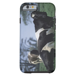 cows in a pasture tough iPhone 6 case