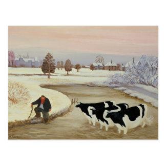 Cows in a Winter River Postcard