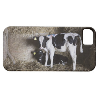 Cows in barn 3 barely there iPhone 5 case