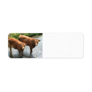 Cows in Devon field, UK Return Address Label