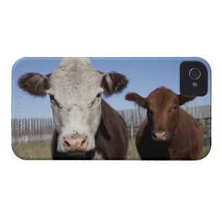 Cows in fenced area Case-Mate iPhone 4 cases