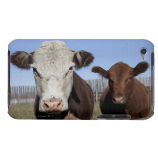 Cows in fenced area iPod Case-Mate cases