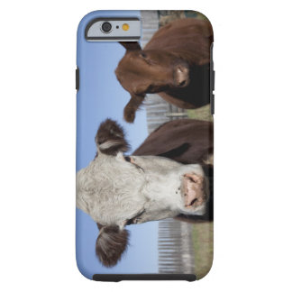 Cows in fenced area tough iPhone 6 case