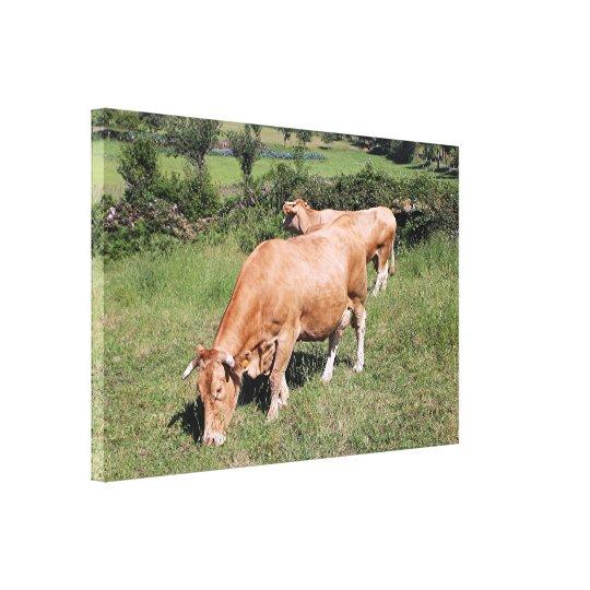 Cows in field on El Camino, Spain Canvas