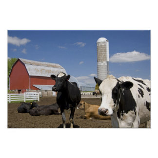 Cows in front of a red barn and silo on a farm 2 posters