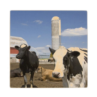 Cows in front of a red barn and silo on a farm 2 wood coaster