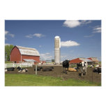 Cows in front of a red barn and silo on a farm photo print