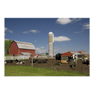 Cows in front of a red barn and silo on a farm poster