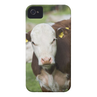 Cows in pasture, close-up Case-Mate iPhone 4 cases