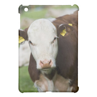 Cows in pasture, close-up cover for the iPad mini