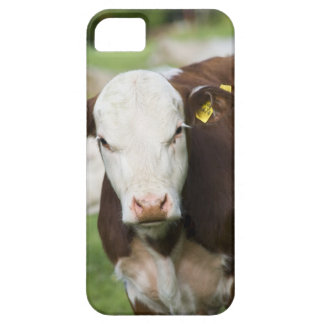 Cows in pasture, close-up iPhone 5 cover