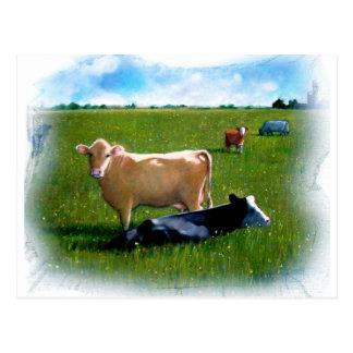 COWS IN PASTURE PASTEL POSTCARDS