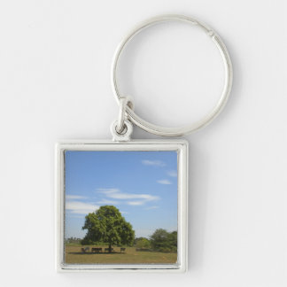 Cows in Shade Keychain