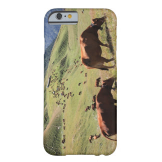 cows in Tarentaise Valley - Tarine race Barely There iPhone 6 Case