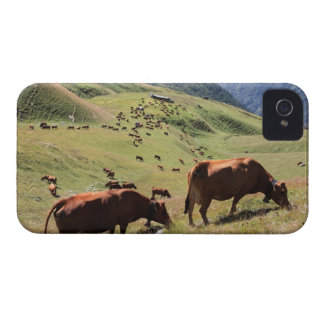 cows in Tarentaise Valley - Tarine race Case-Mate iPhone 4 Cases