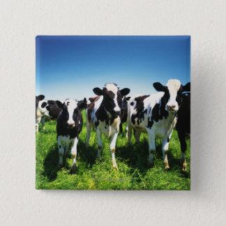 Cows in the field, Betsukai town, Hokkaido 15 Cm Square Badge