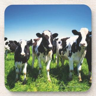 Cows in the field, Betsukai town, Hokkaido Drink Coasters