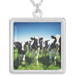 Cows in the field, Betsukai town, Hokkaido Silver Plated Necklace