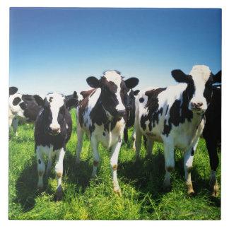 Cows in the field, Betsukai town, Hokkaido Tile