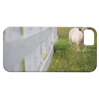 Cows in the field case for the iPhone 5