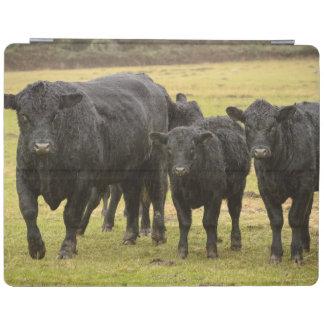 Cows in the rain iPad cover