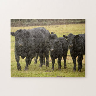 Cows in the rain jigsaw puzzle