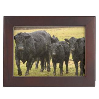 Cows in the rain keepsake box