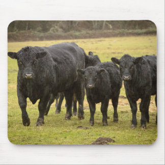 Cows in the rain mouse mat
