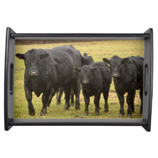 Cows in the rain serving tray