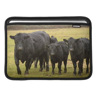 Cows in the rain sleeve for MacBook air