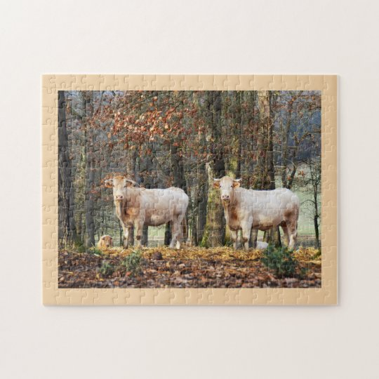 Cows in woodland, France Jigsaw Puzzle